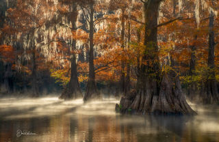 Cypress Swamps of Texas