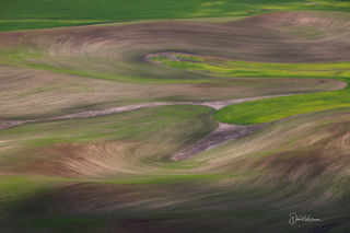 Paint Brushed Fields