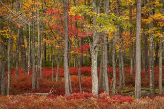 Fall Color in the Quehanna Wilds