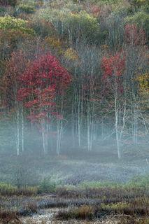 Colorful Fall Misty Sunrise