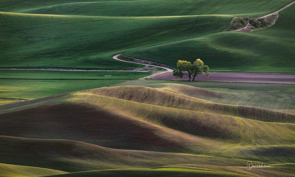 New Fields Of Wheat print
