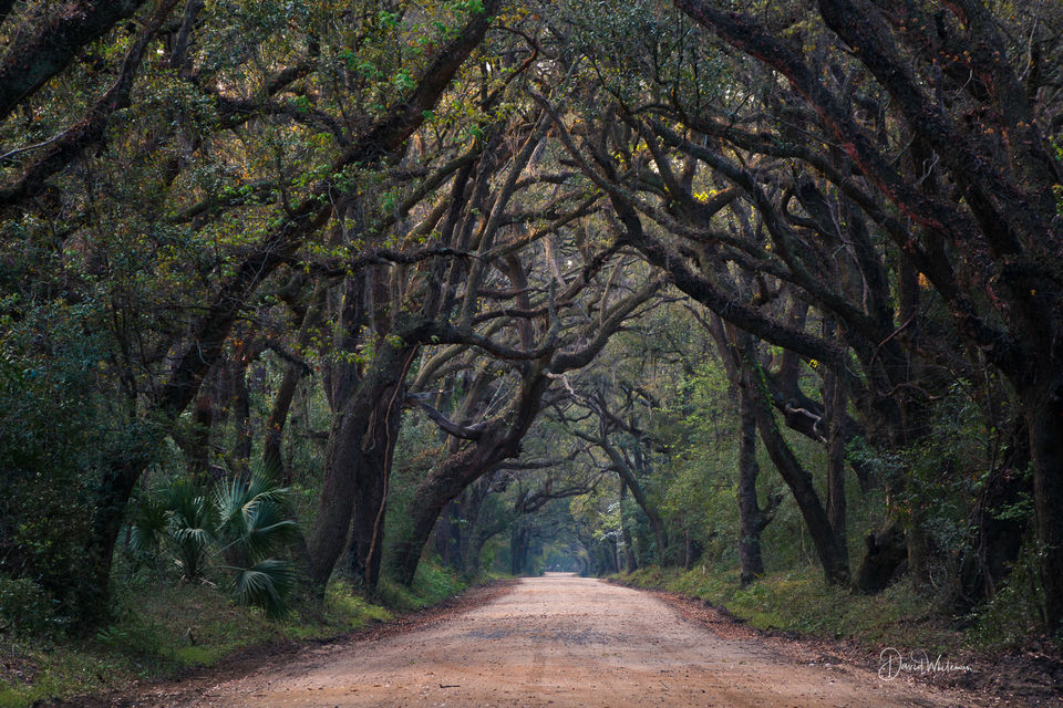 Botany Bay Road print