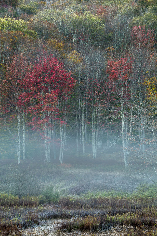 Colorful Fall Misty Sunrise print
