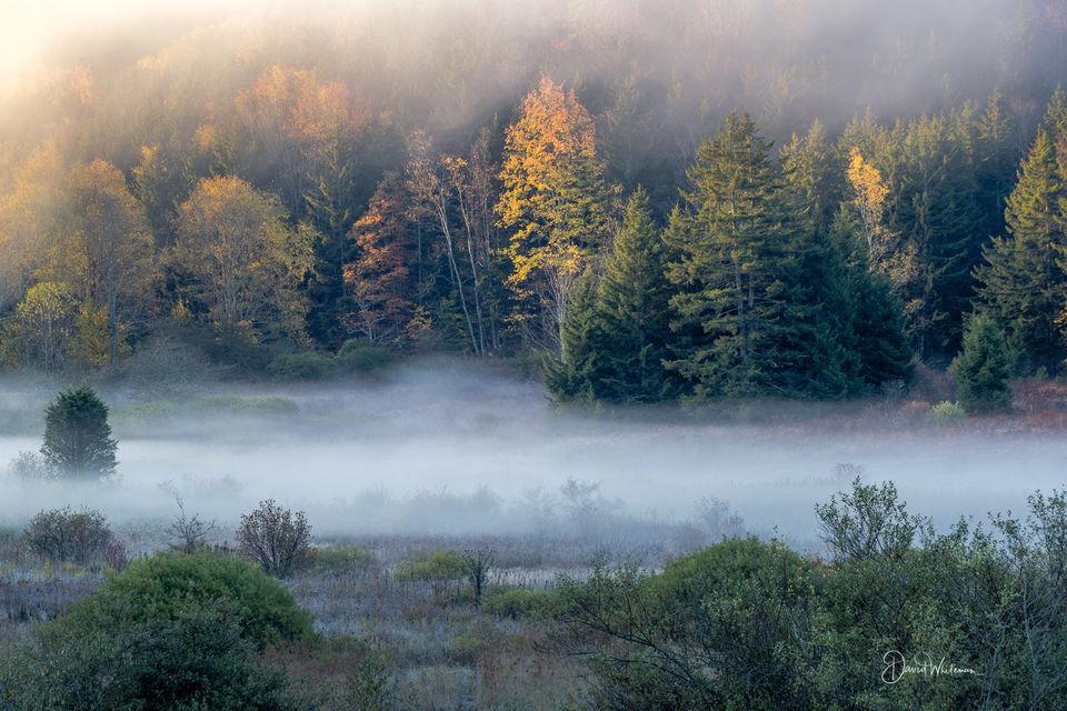 Misty Fall Sunrise print