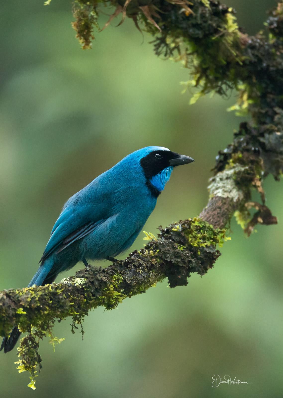 TurquoiseJ Jay