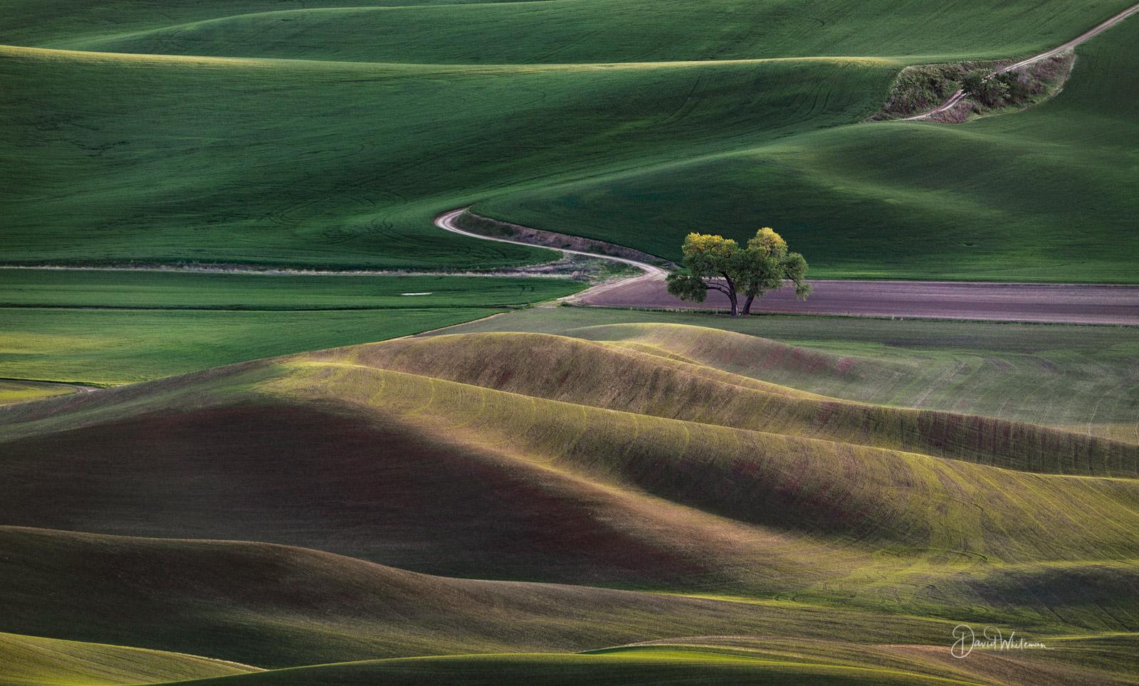 New Fields Of Wheat