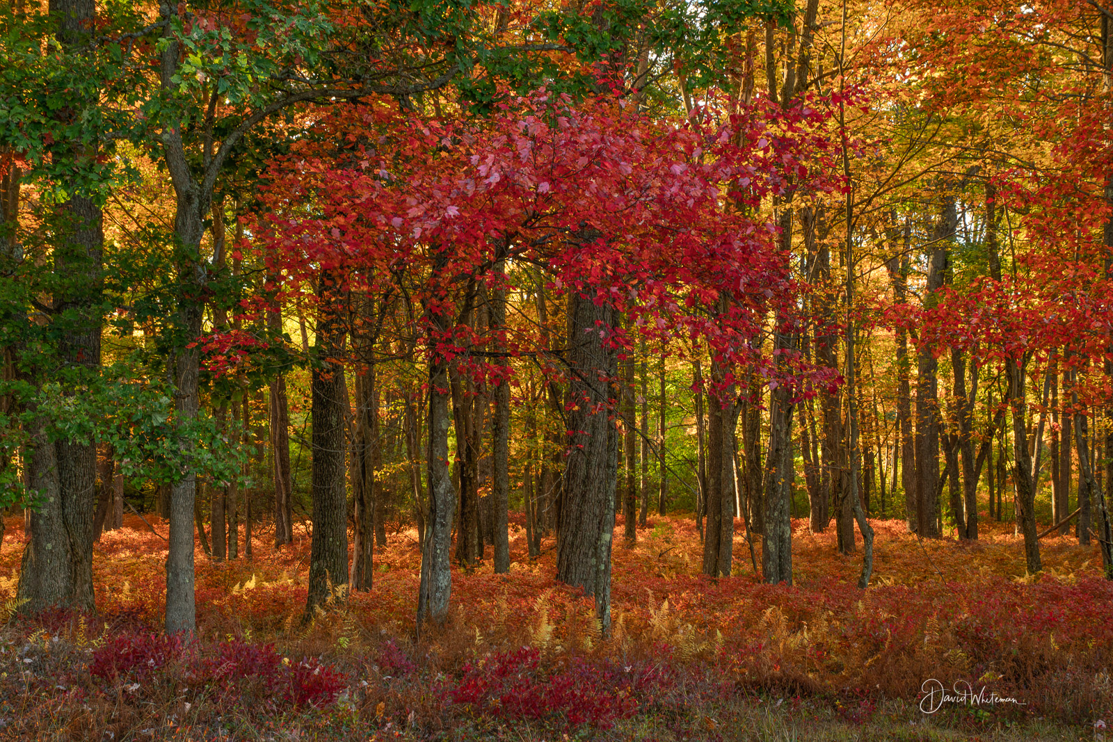 Fall Color in the Quehanna Wilds 2