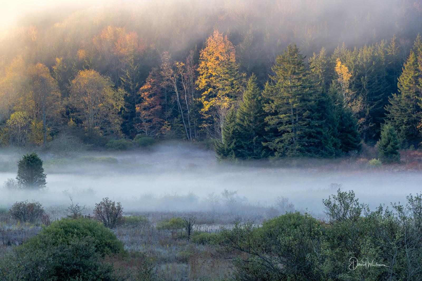 Misty Fall Sunrise